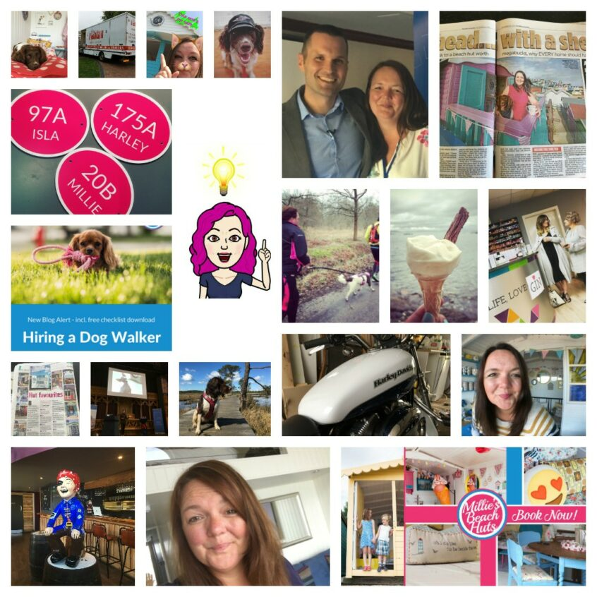 2016 REflections My Year