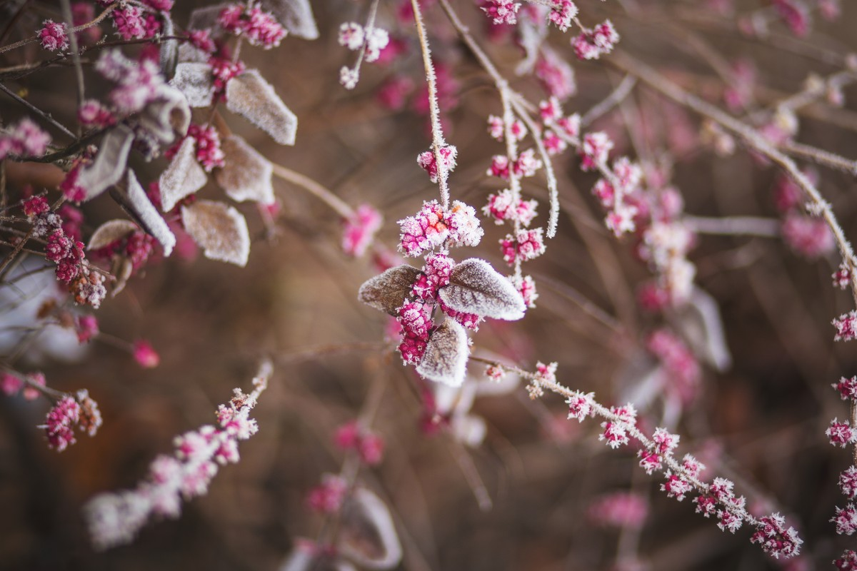 things to do in essex this january 2017 winter frosted berries